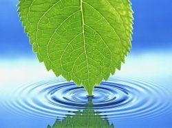 Вода – любопытные подробности